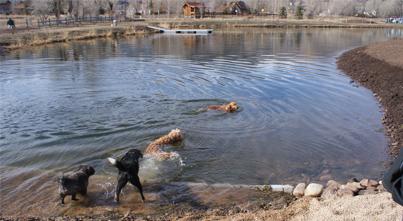 WC-dog-park-swim-pond