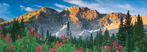 Wasatch-mtns-pink-flowers
