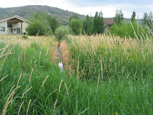 Parcel T - Drainage creek choked with Indian Grass