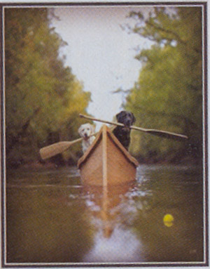 Two labradors in canoe paddling to tennis ball