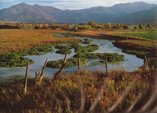 wetlands-1978