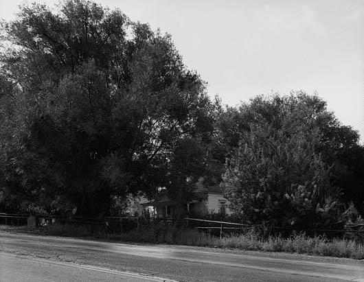 Black Willow trees lined Hwy 224 for over 100 years until UDOT cut them down for the road expansion.
